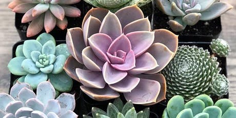 Succulents & Oils Workshop!  tickets