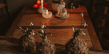 Christmas Kokedama Workshop for Adults at Cove Civic Centre - SOLD OUT tickets