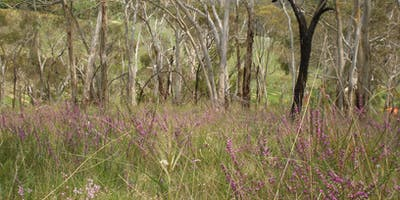 2019 Bushcare's Big Day Out - Morialta Conservation Park