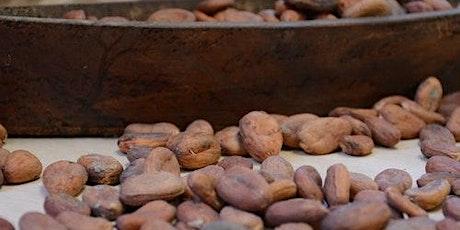 Discover Mexico Park Cozumel: Entrance & Chocolate Workshop boletos
