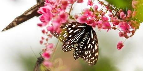Kuala Lumpur Bird Park, Orchid Garden, Butterfly & Deer Garden Tour tickets
