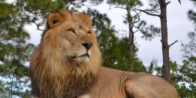 Lion Country Safari –  Drive Through Safari + Adventure Park