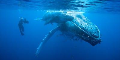 Doug Allan FRSGS: Whale Meet Again... (AYR)