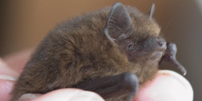 Fundraiser - Bat Walk for Heritage