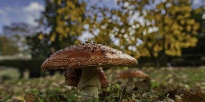 Fantastic Fungi at Half -Term