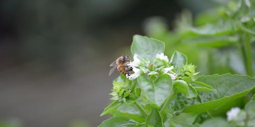 Pints 'n' Plants - St. Louis's Urban Pollinators