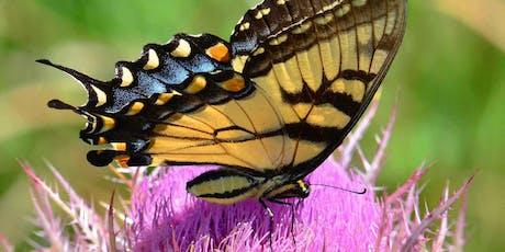 Top Tips for Tempting Pollinators tickets