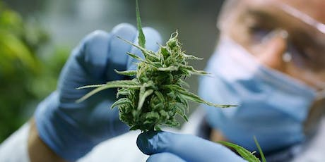 How to Get a Career in the Cannabis Industry tickets