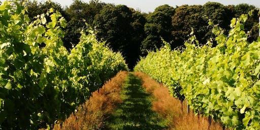 The Vineyard Feast - 8/9/19
