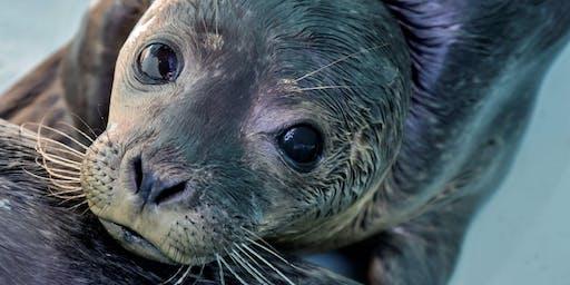 Mystic Aquarium's Ocean Ambassador Coastal Clean up at Surfer's End