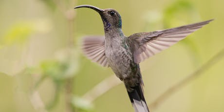 Behind The Shot: Birding in the Cloud Forest of Western Panama tickets