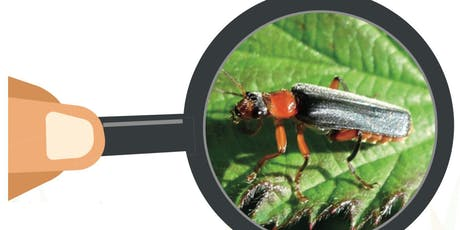 Tooting Common Minibeast Hunt tickets