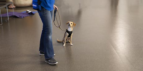 Mutt Manners - Beginner Dog Training tickets