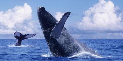 Voyage Initiatique avec les Baleines