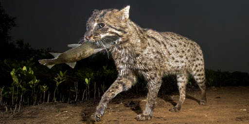 Hooked on the Fishing Cat - an evening with Fishing Cat Conservancy