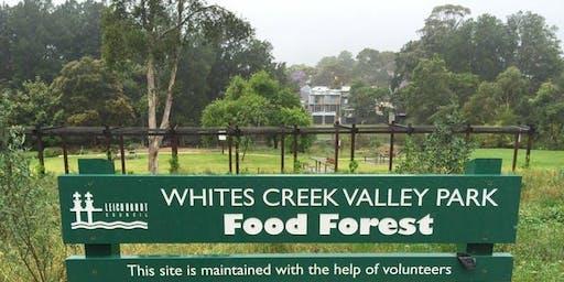 Food Forest Tour @ Footprints Ecofestival