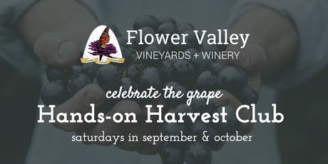 Hands-on Harvest Club   Celebrate the grape! tickets