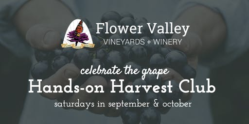 Hands-on Harvest Club | Celebrate the grape!