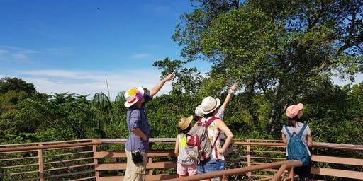18 Aug (Sun) - Free guided walk at Chek Jawa Boardwalk
