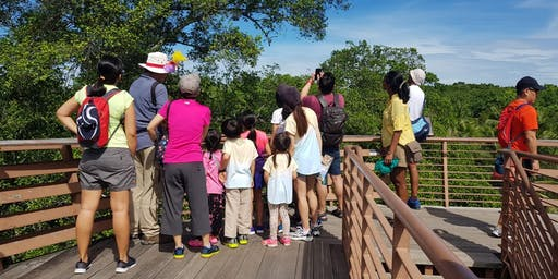 8 September (Sun) - Free guided walk at Chek Jawa Boardwalk