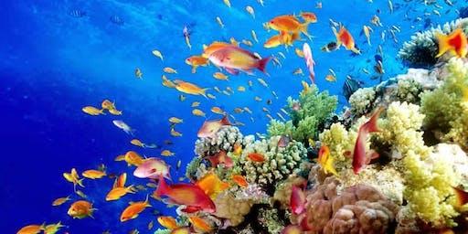 Expo Adictos al Arrecife