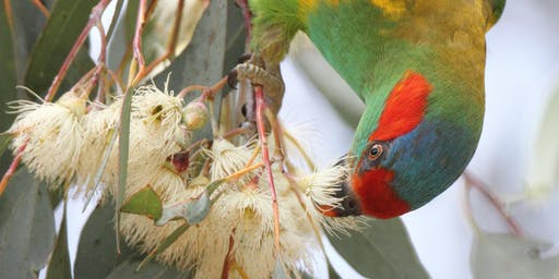Biodiversity Month Birding Morning- Deepwater Park