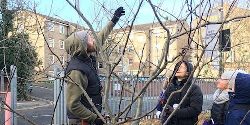 Winter Pruning Course, Camden