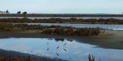 Ways To Nature Guided Nature Walk: Wetland Wander