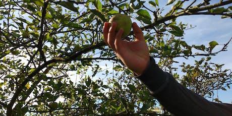 Apple Harvest in Mill Hill (London)  tickets