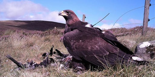 An Evening with the South of Scotland Golden Eagle Project
