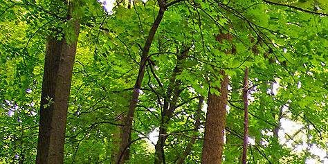 Notions d'aménagement forestier 1 (Ste-Victoire-de-Sorel)