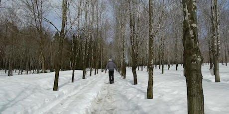 Plantation d'érables et physiologie de l'arbre billets