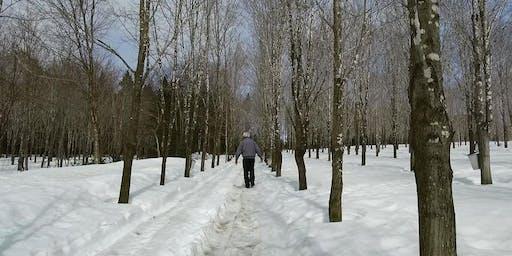 Plantation d'érables et physiologie de l'arbre