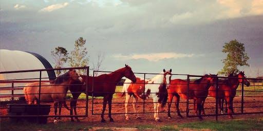 Open Farm Day 2019 - Pony Ride Tickets