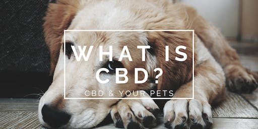 What Is CBD? | Pet Night