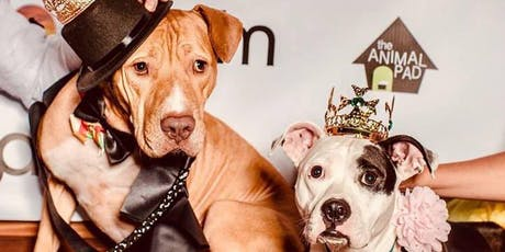 Charity Pooch Prom tickets