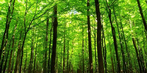 Notions d'aménagement forestier 2 (Ste-Victoire-de-Sorel)