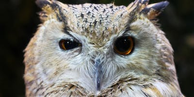 What Did The Owl Eat?