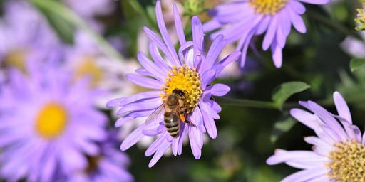 Adults: Primo Plantings for Pollinators