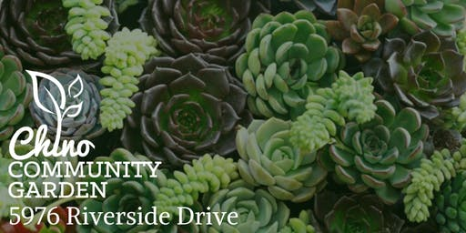 Community Garden Workshop-Succulents