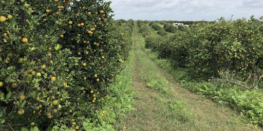 Citrus Soil Health Field Day - Fertility, Cover Crops, & Compost