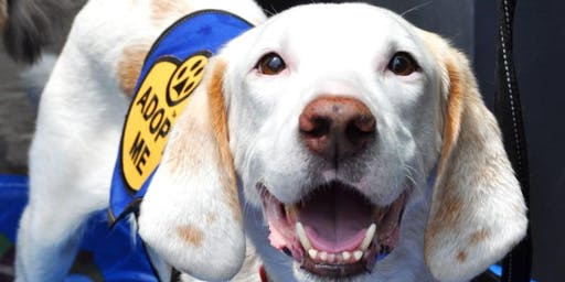 Happy Hour: Barks and Beer