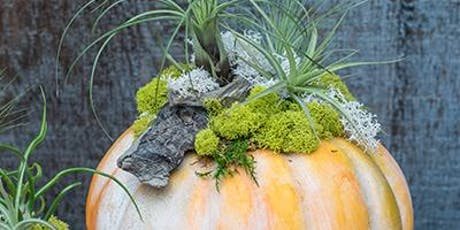 Tillandsia Pumpkin Workshop with Kathleen Nestell tickets