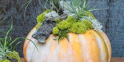 Tillandsia Pumpkin Workshop with Kathleen Nestell