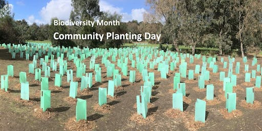 Biodiversity Month - Community Planting on the Barwon River, Geelong.