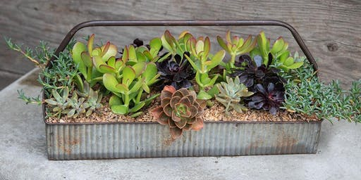 Succulent Planter Workshop with Catherine Smith