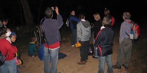 Night Walk Scaly Bark Creek