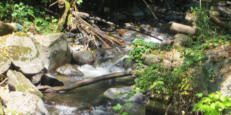 Our Land Our Water: Stream Stewardship & Restoration Tour - Soos Creek tickets