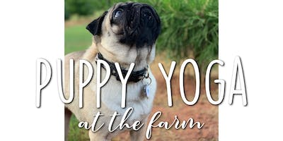 Puppy Yoga at the Farm