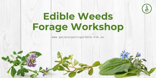 Edible Weeds Forage Workshop